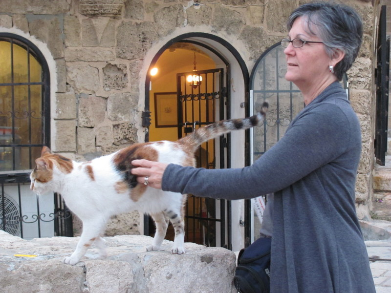 Joppa cat, Biblical Israel Tours