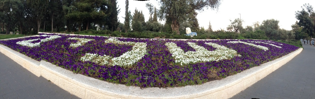 Jerusalem flowers Hebrew