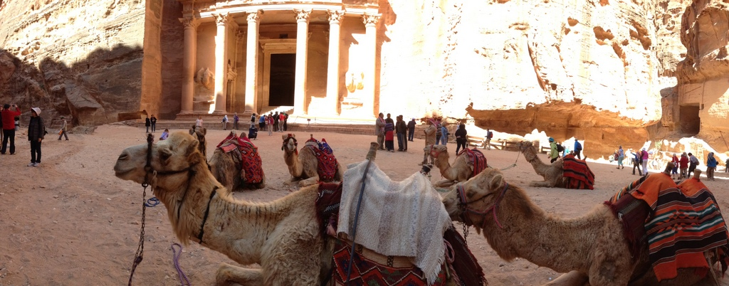 Jordan - Petra - camels by the Treasury