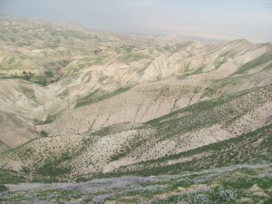 Judean Desert (in the winter)