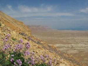 Masada flowers and Dead Sea