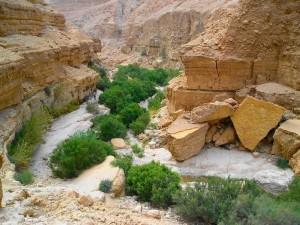 Wadi Engedi
