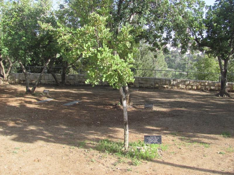 corrie ten boom tree