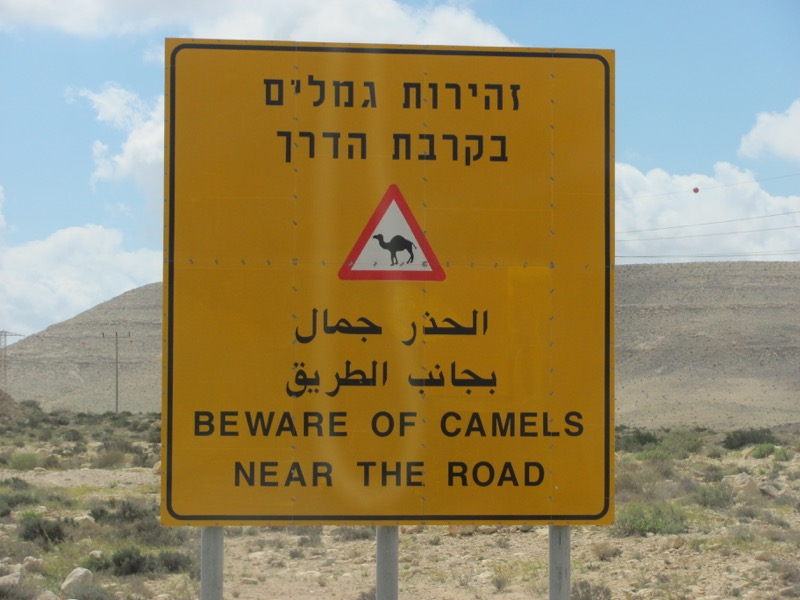 beware of camels sign israel