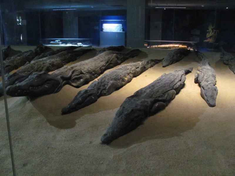 mummy crocodiles egypt