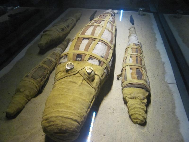 mummy crocidiles nile river