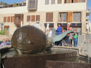 Jaffa whale