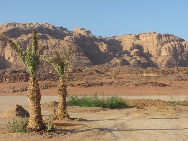 wadi rum palm trees