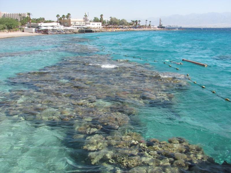 red sea coral elat israel
