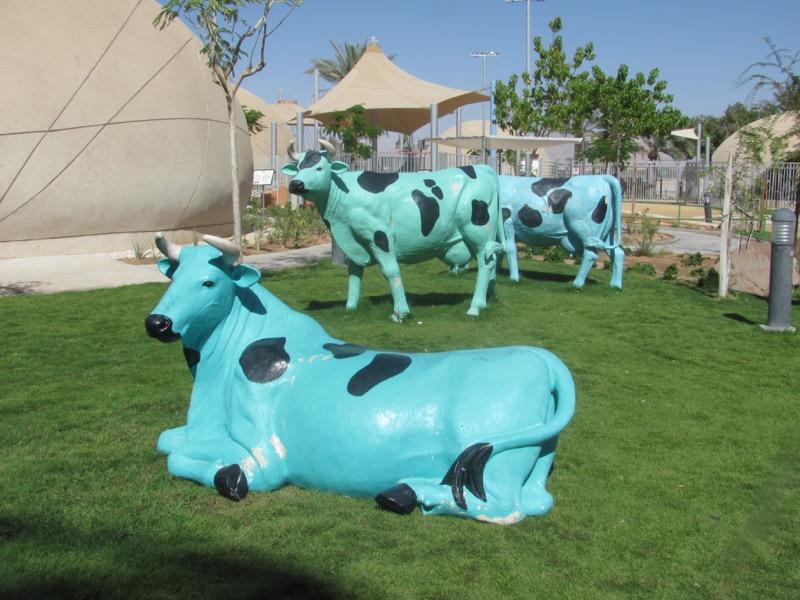 green cows yovatah israel