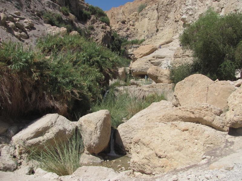 engedi wadi david