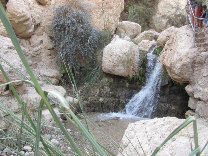 engedi water spring