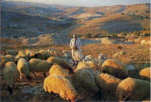 shepherd in Bethlehem