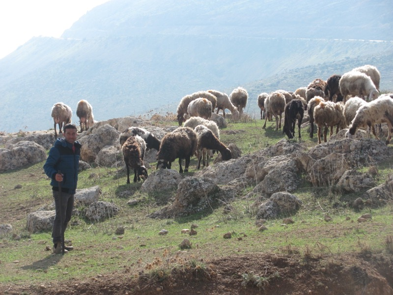 israel shepherd israel tour