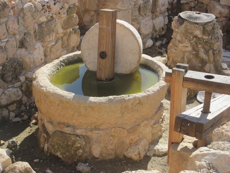 olive oil press shiloh israel tour