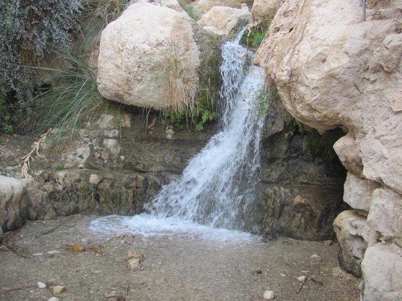 engedi israel tour