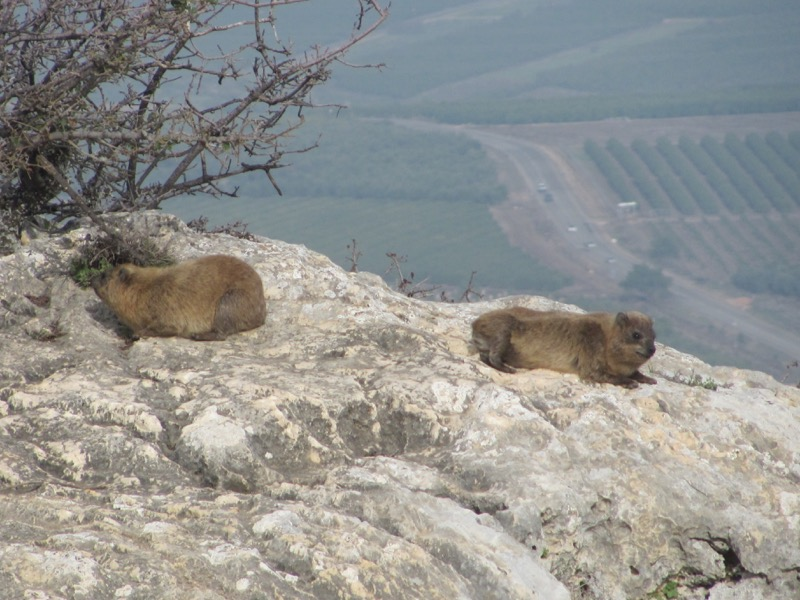 Coneys on Mt. Arbel January2017 FAM Israel Tour
