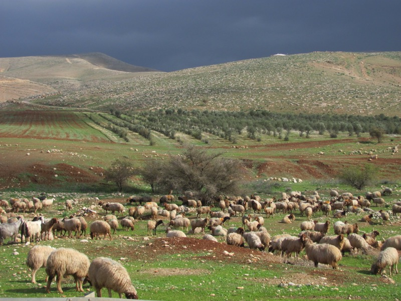 Hills of Samaria shepherds January 2017 FAM Israel Tour