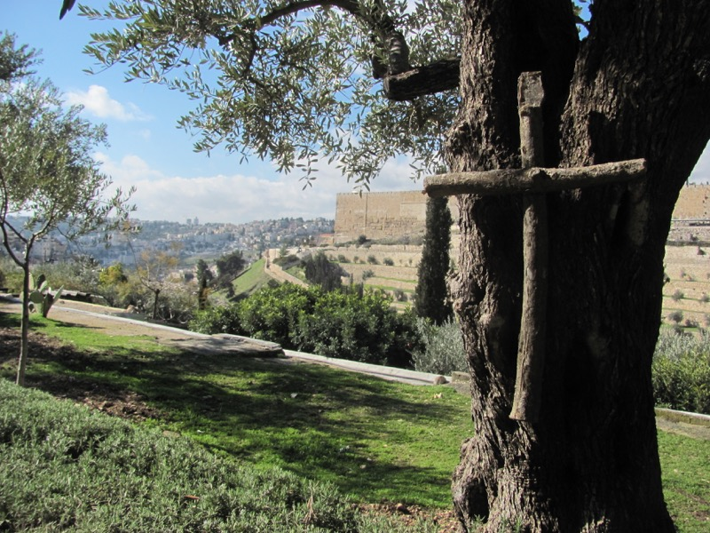 Garden of Gethsemane January 2017 FAM Israel Tour