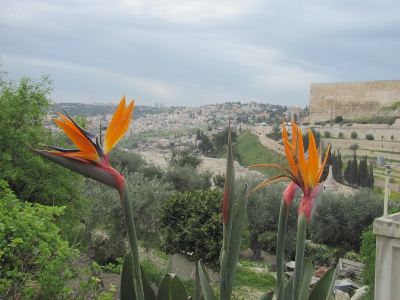 Jerusalem Garden of Gethesmane Mount Israel-Jordan Tour March 2017