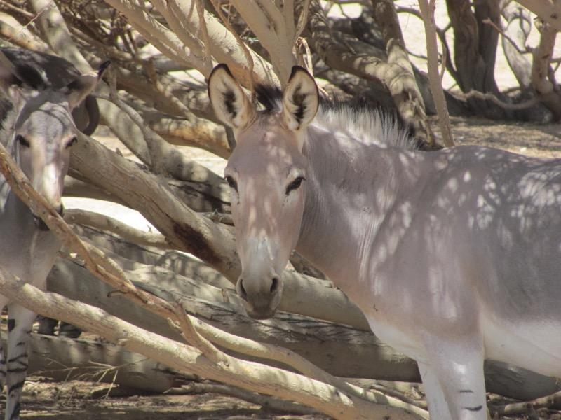 Bar Hai Yovata Nature Preserve April 2017 Israel Tour