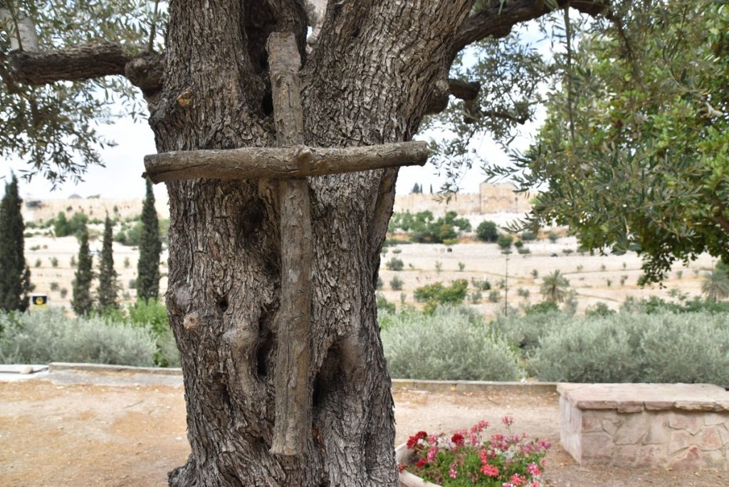 Garden of Gethsemane Jerusalem June 2017 Israel Tour