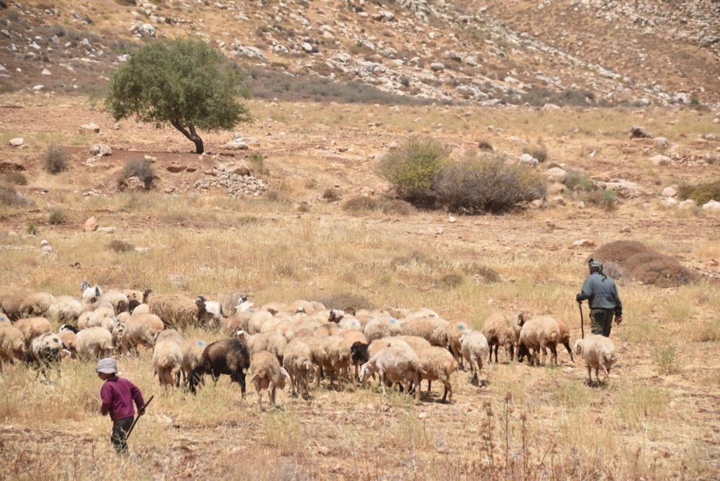 Shepherds June 2017 Israel Tour