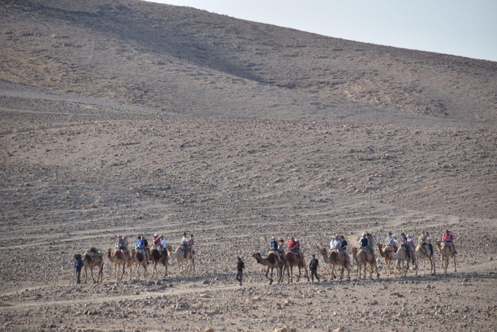 Hanokdim camel rides June 2017 Israel Tour