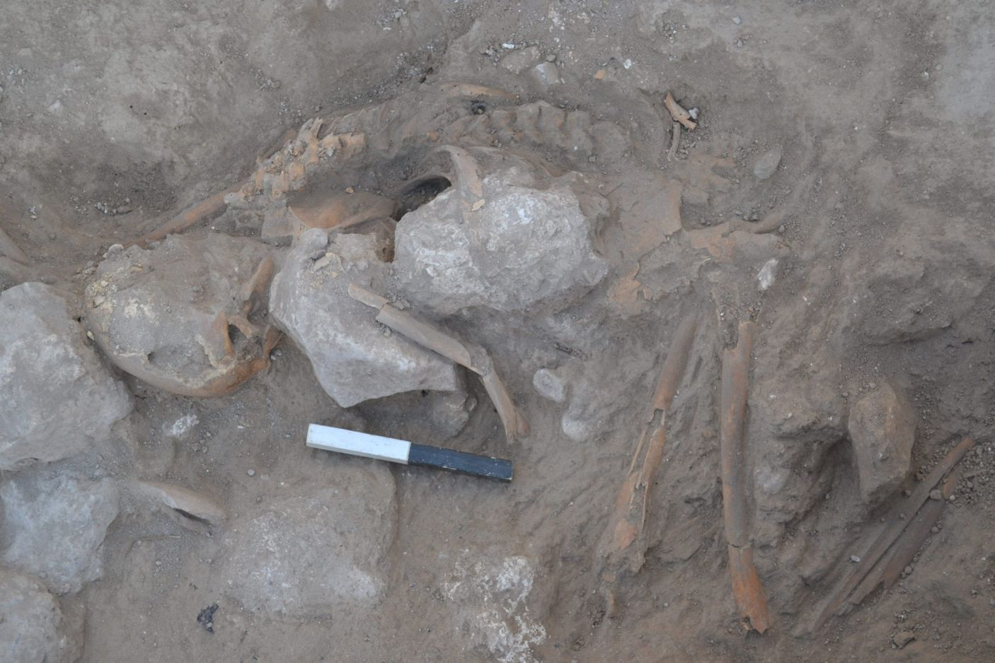 Discovery of Canaanite Body at Tel Gezer