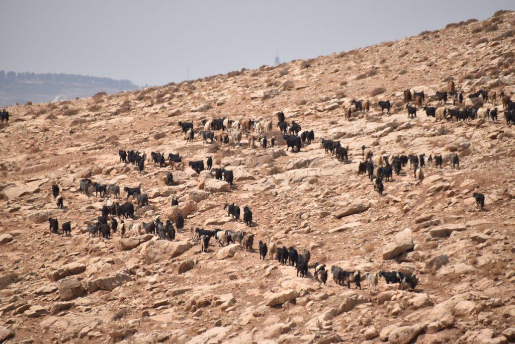 Judean Desert September 2017 Israel Tour Group