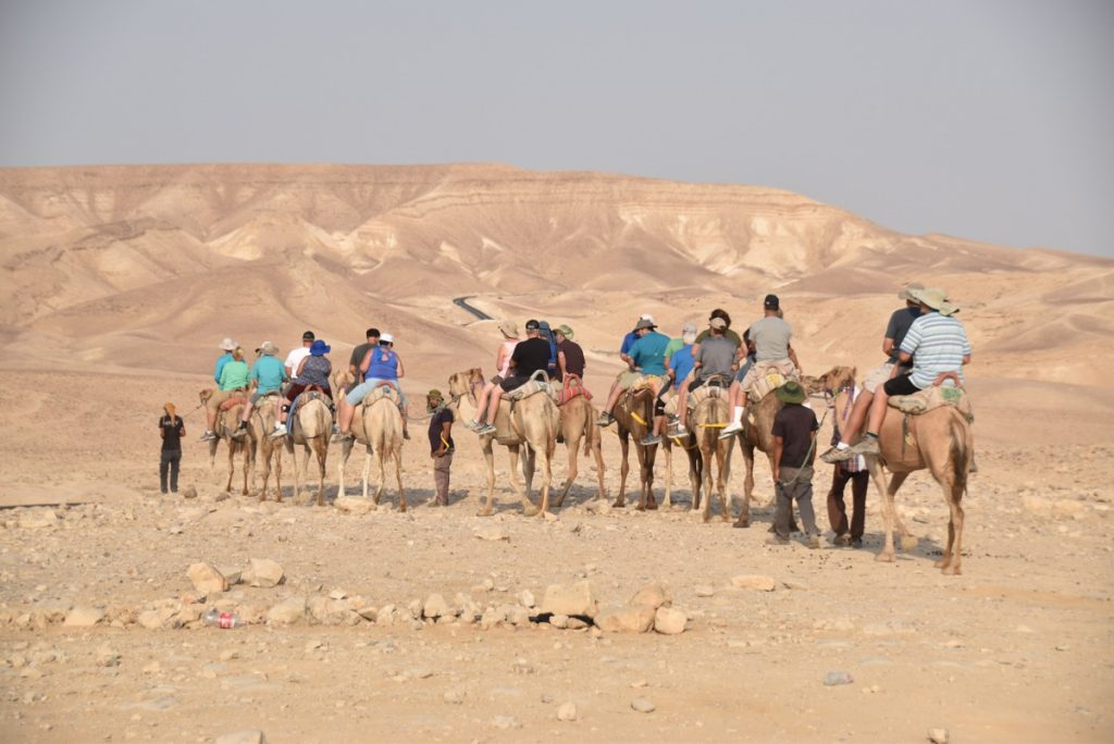 Camel Rides September 2017 Israel Tour