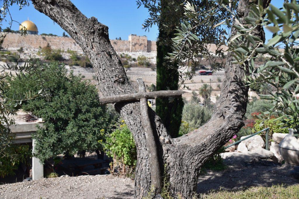 Gethesmane Oct-Nov Egypt-Jordan-Israel Tour - John DeLancey