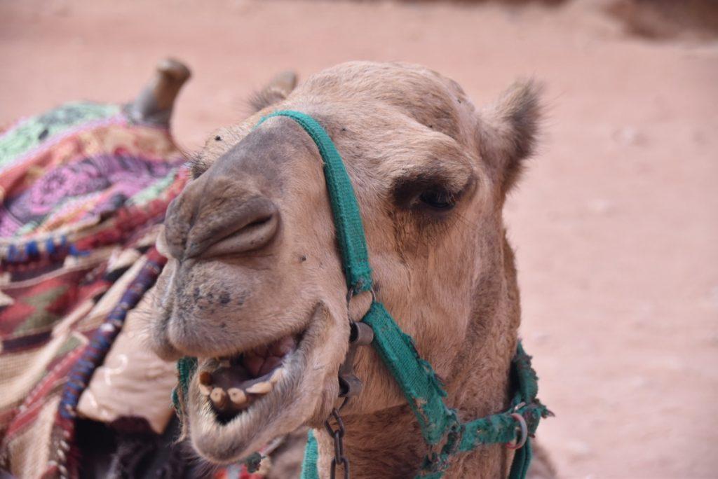 Petra - Oct-Nov 2017 Egypt-Jordan-Israel Tour - Dr. DeLancey