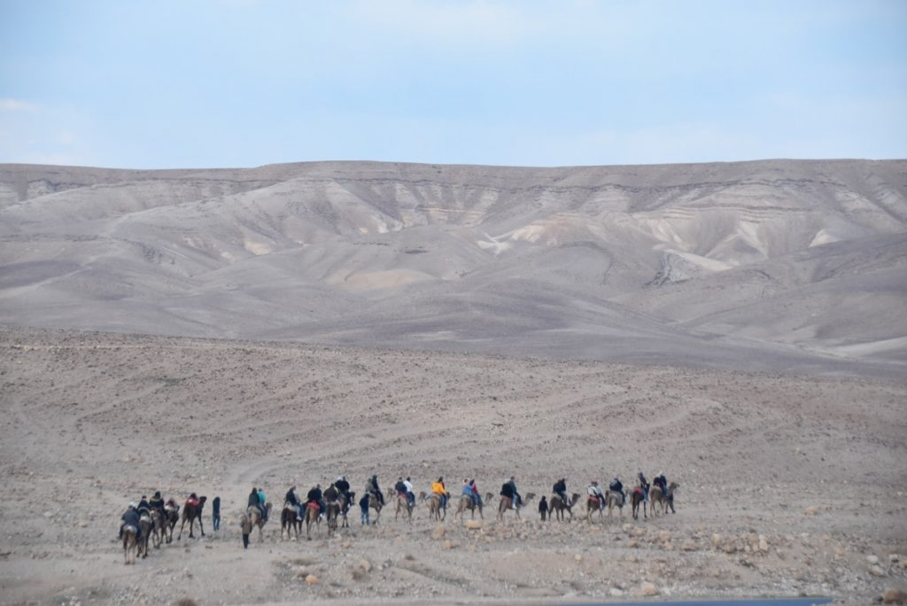 Hanokdim camel rides January 2018 Israel Tour