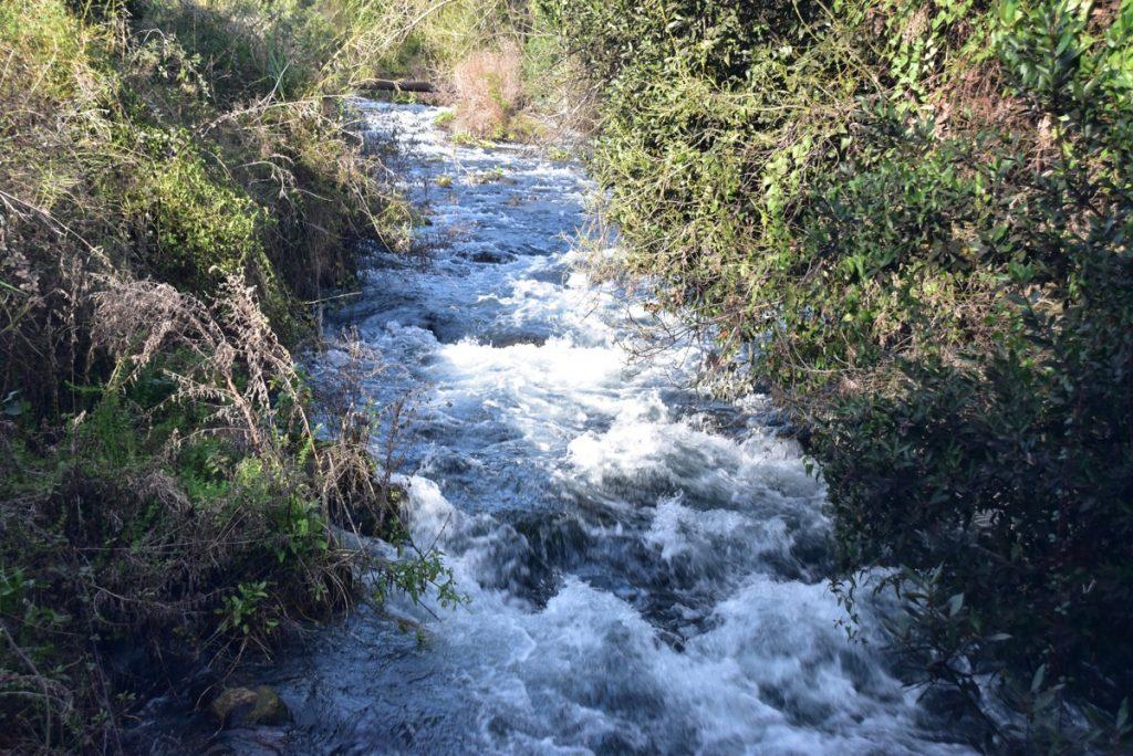 Dan Nature Preserve Jordan River January 2018 Israel Tour