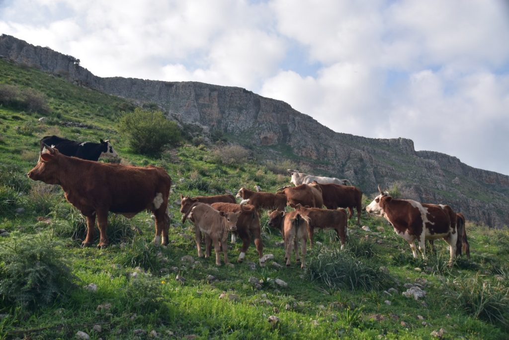 Arbel March 2018 Israel Tour with John DeLancey