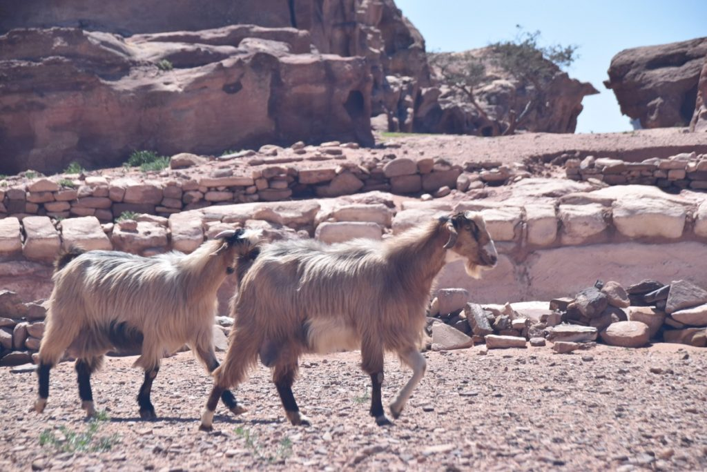 Petra Jordan March 2018 Israel Tour with John DeLancey