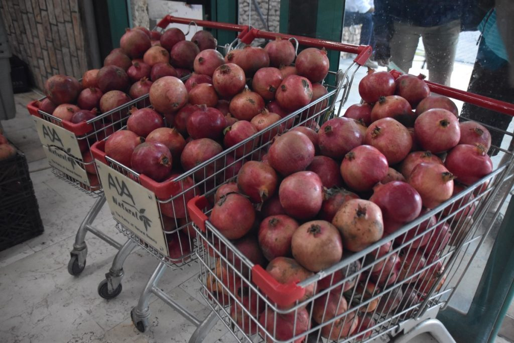 Jericho pomegranates Nov 2018 Israel Tour with John DeLancey