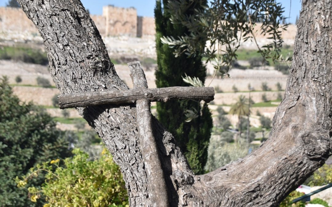 January 2019 Biblical Israel Tour – Day 11 Summary