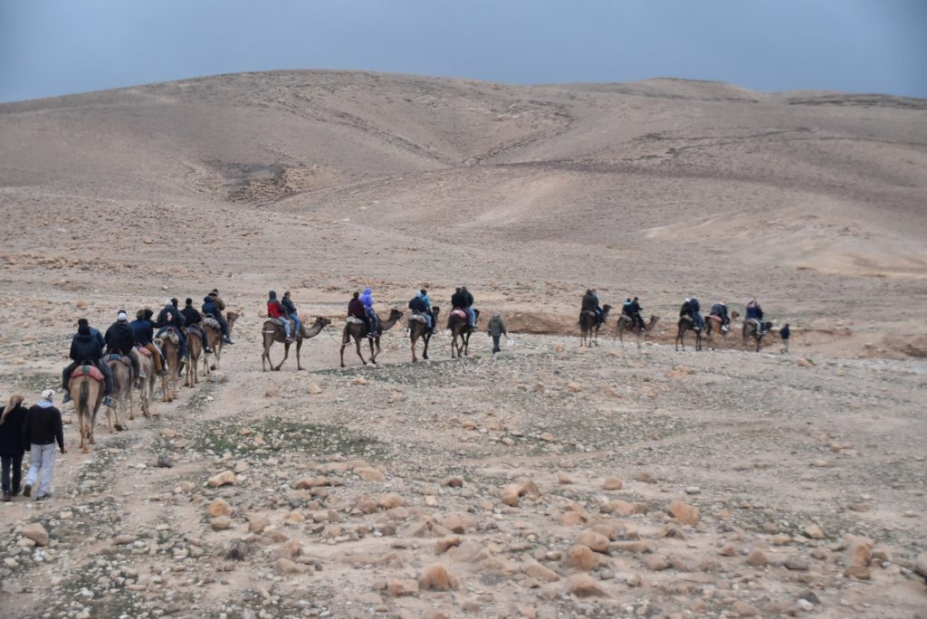 Camel ride Hanokdim January 2019 Israel Tour with John Delancey