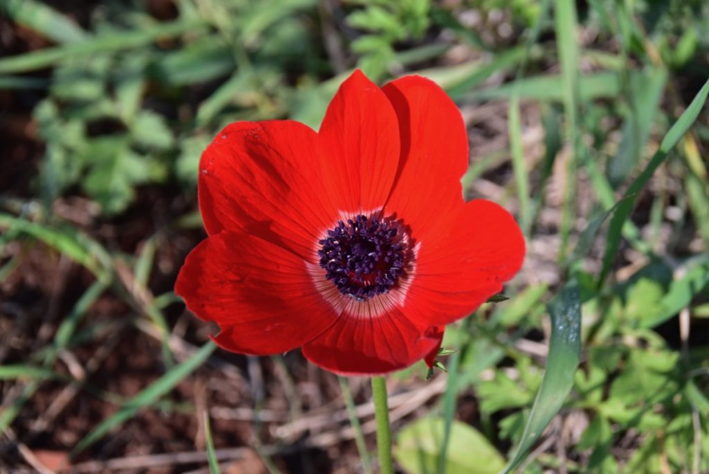 Arbel flowers February 2019 Israel Tour with John DeLancey