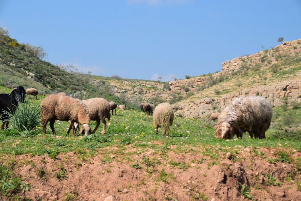 Samaritan Shepherds February 2019 Israel Tour with John DeLancey