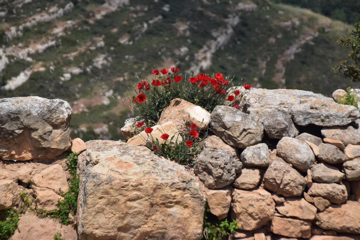 Shiloh stone wall