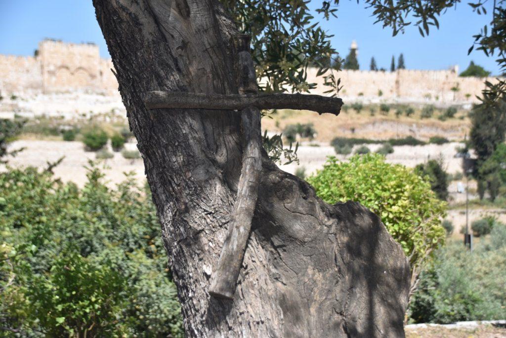 Jerusalem Gethsemane May 2019 Israel Tour with John DeLancey