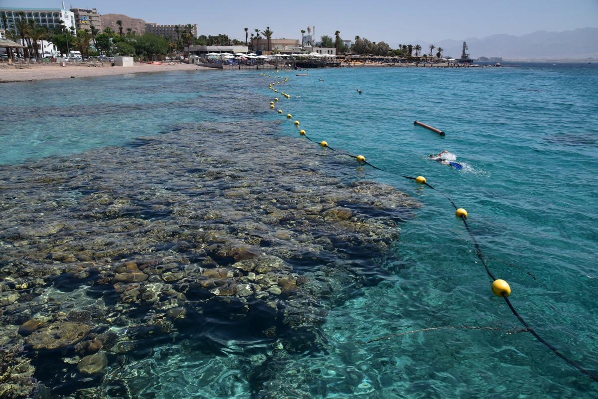 Red Sea Coral Beach