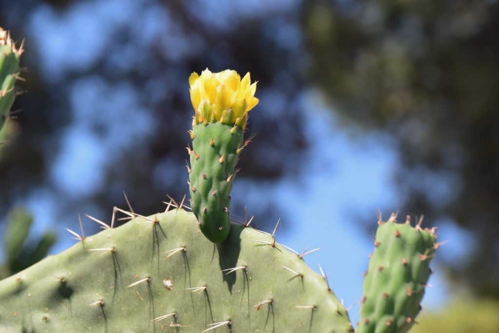 Prickly pair June 2019 Israel Tour with John DeLancey
