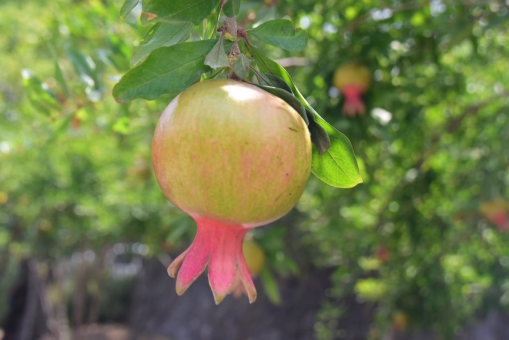 Pomegranate June 2019 Israel Tour Group with John DeLancey