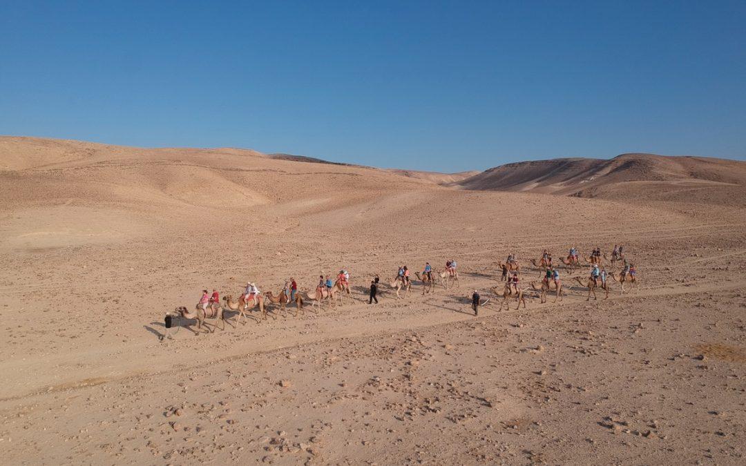 Hanokdim Camel Rides