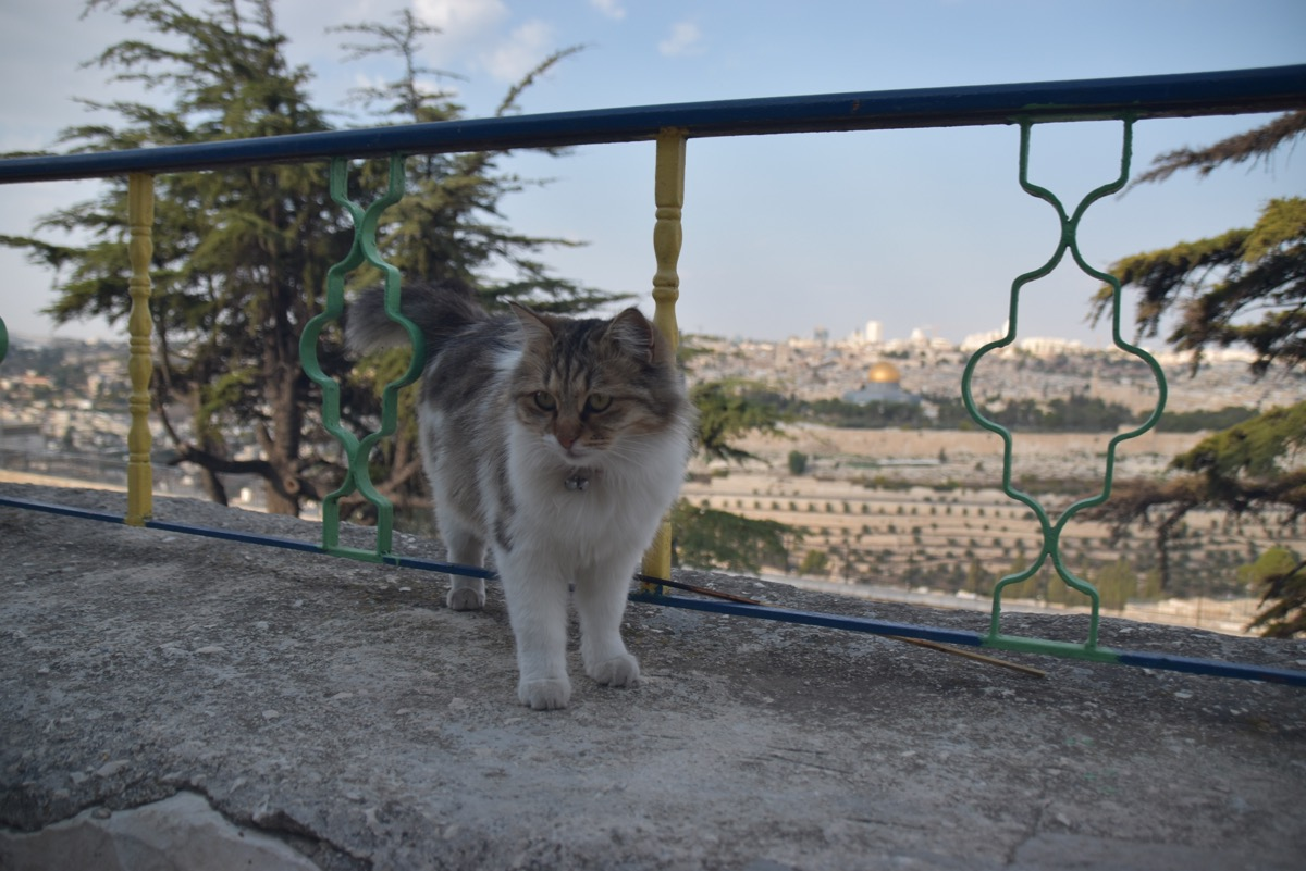 Cat and Temple Mount