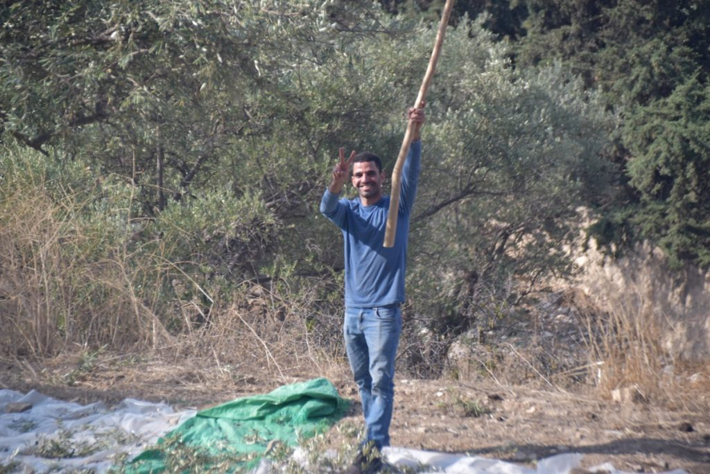 Olive trees Nov 2019 Biblical Israel Tour with John DeLancey